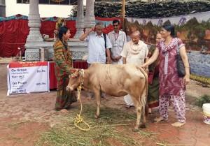Gou Ark Benefits - Importance of distilled cow urine.