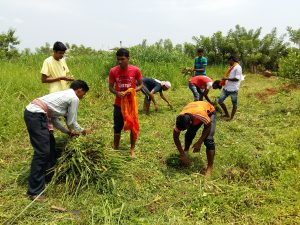 Organic Farming and Indian Agriculture