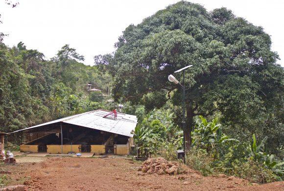 Cow Sheds at Surabhivana