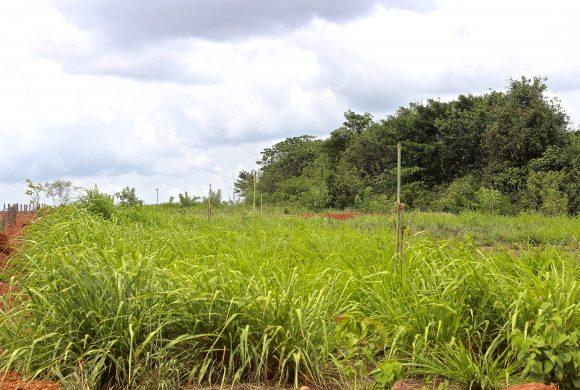 Barren Land to Grassland at Gomala