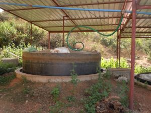 Cow Dung - Biogas production