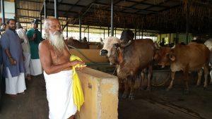 Hans Baba in Surabhivana Goshala